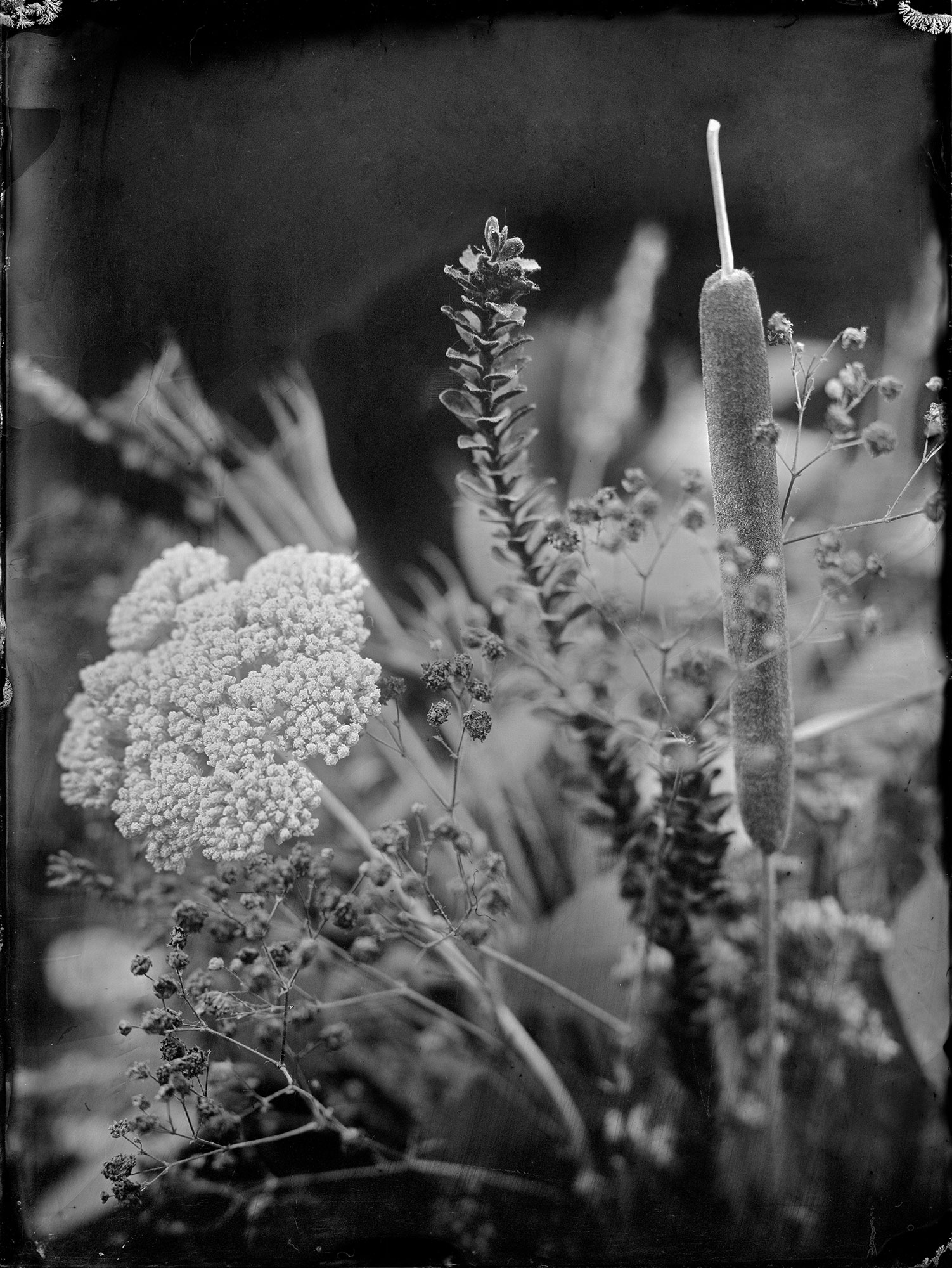 Plantas-Secas001BD
